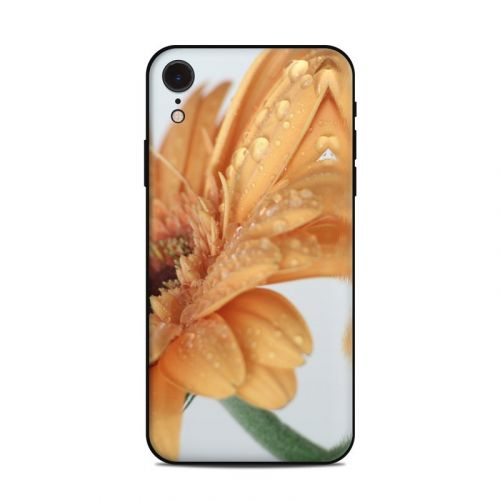 Golden Gerbera iPhone XR Skin