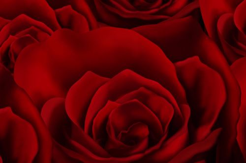 LG Select Skin design of Red, Garden roses, Rose, Petal, Flower, Nature, Floribunda, Rose family, Close-up, Plant with black, red colors