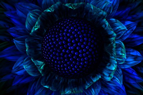 Design of Blue, Electric blue, Fractal art, sunflower, Organism, Pattern, Flower, Plant, Symmetry, Petal with blue, green, black colors