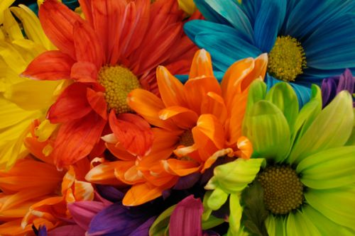 Design of Flower, Petal, Orange, Cut flowers, Yellow, Plant, Bouquet, Floral design, Flowering plant, Gerbera with red, green, black, blue colors
