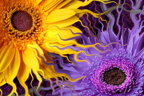 Design of Purple, Flower, Yellow, Violet, Sunflower, Petal, Fractal art, Plant, sunflower, Art with black, purple, orange, green, red, blue colors