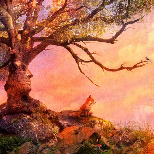 Fox Sunset