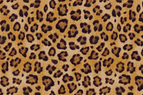 Design of Pattern, Felidae, Fur, Brown, Design, Terrestrial animal, Close-up, Big cats, African leopard, Organism with orange, black colors