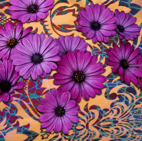 Purple Daisy Damask