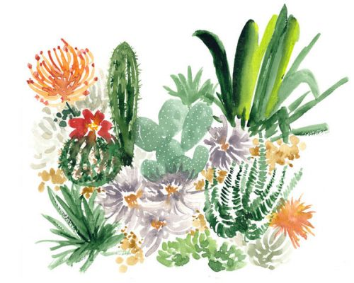 Design of Cactus, Plant, Flower, Botany, Leaf, Illustration, Pine, Grass, Succulent plant, Branch with white, green, red, orange colors